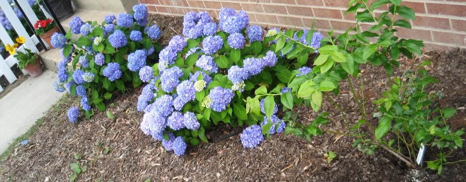 And it begins … my first garden update.